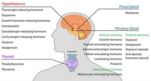 호르몬 불면증을 피하고 완벽한 수면을 위한 7가지 팁